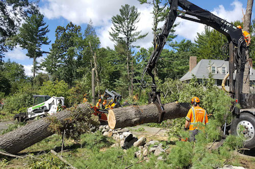 Picture of a large tree being cut down using larg equipment in Franklin, TN
